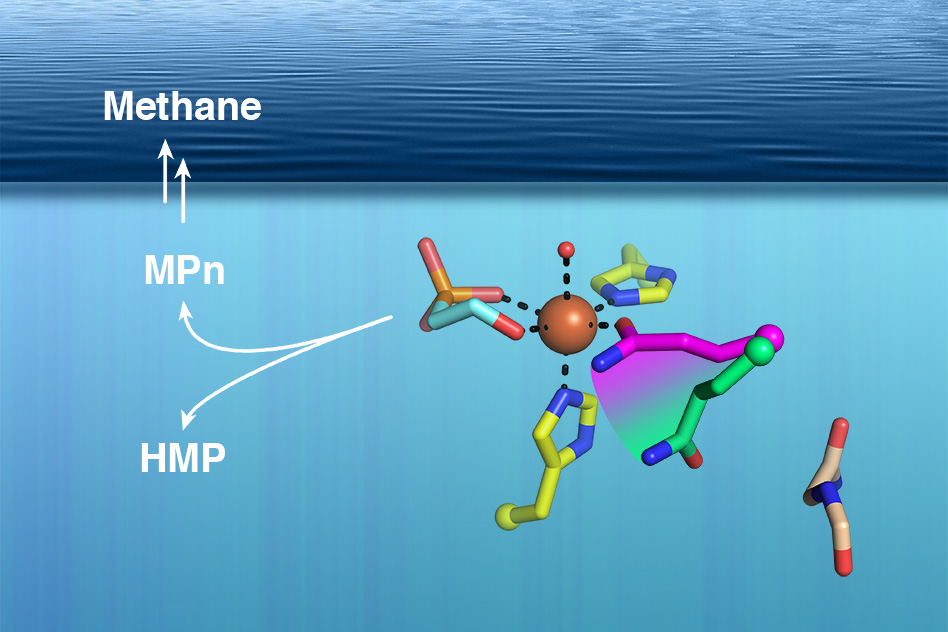 Protein structures help to solve ocean methane mystery